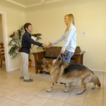 Our qualified trainers performing dog training services in Long Beach, CA